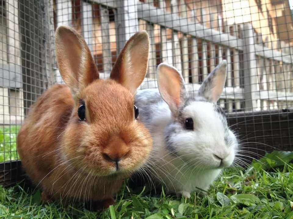 Кролики фото картинки для детей