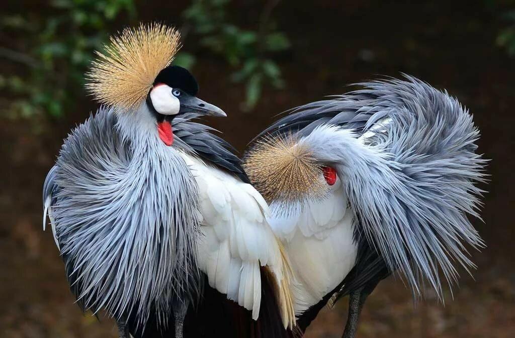 днем все птицы из красной книги с фото преимуществом является