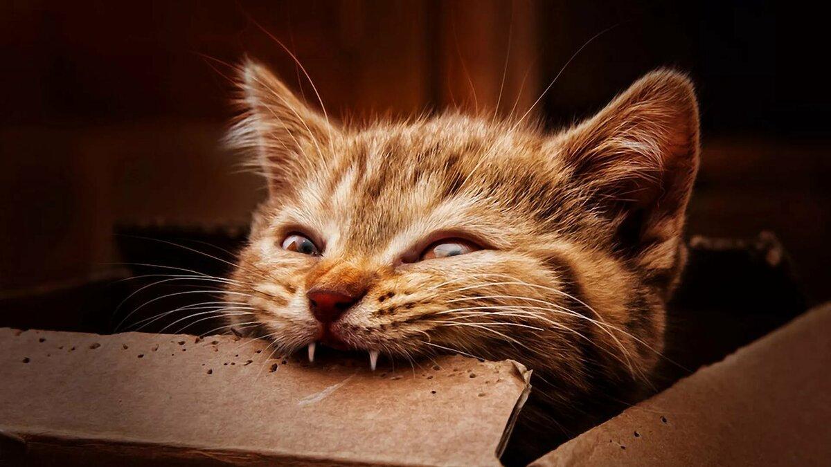 Прикольные картинки животные кошки, выпускной