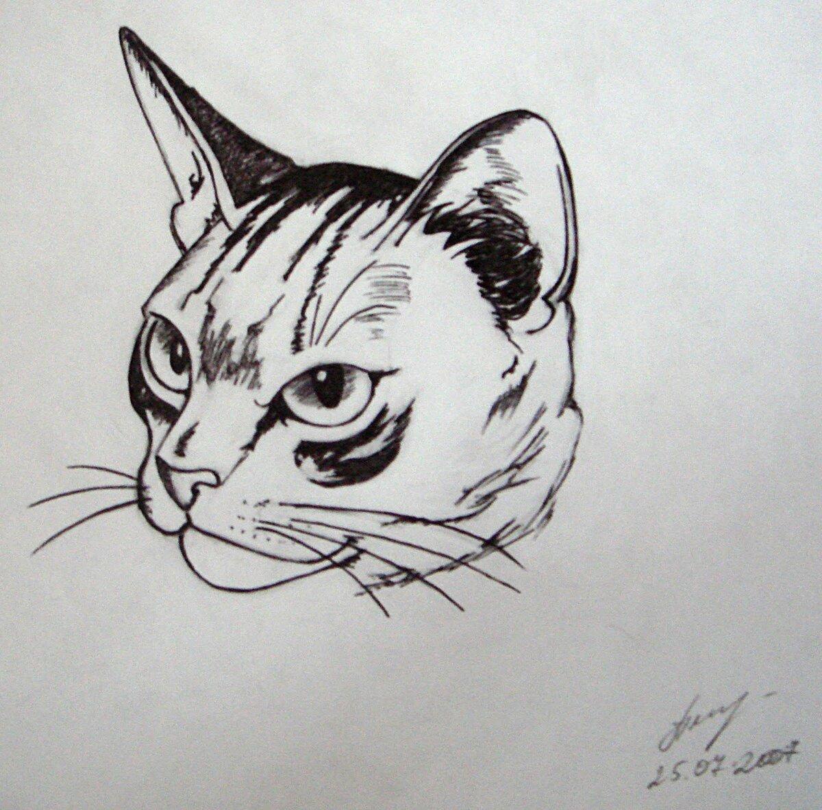 Благодарностью работу, картинки для срисовки смешные котики гелевой ручкой