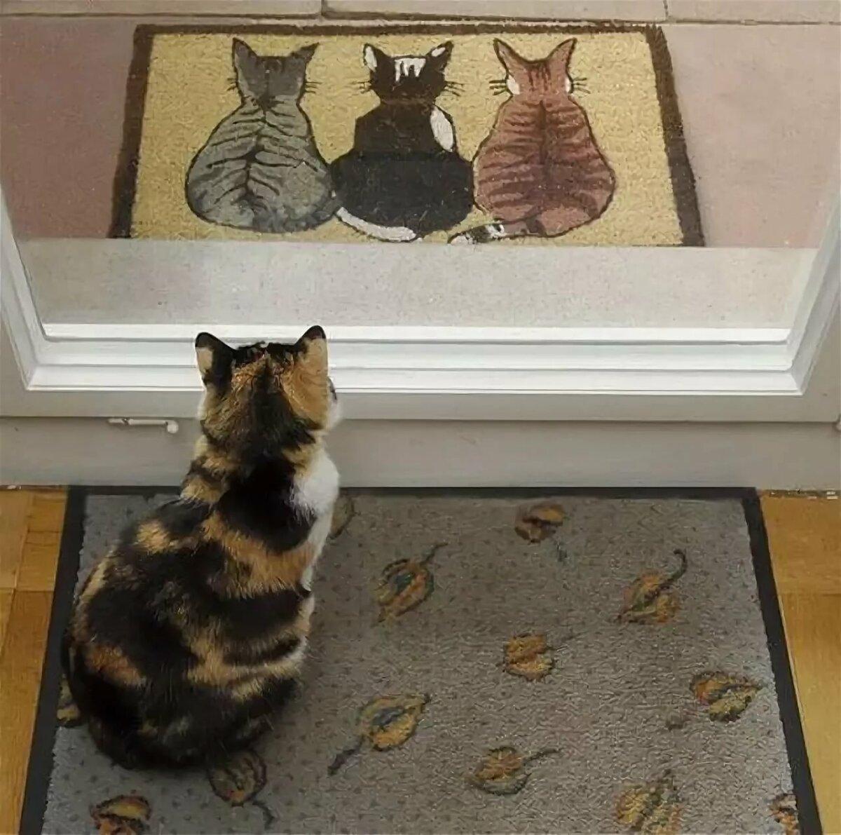 Рисунки с котами прикольные с надписями, осенний лист открытка
