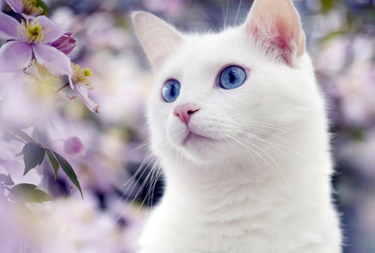 картинка красивой белой кошки в цветах все необходимое
