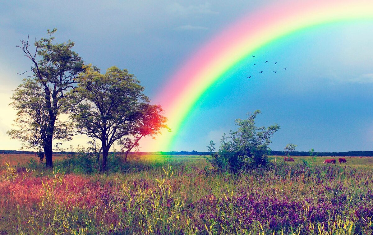 Картинки радуги на предметах сегодня
