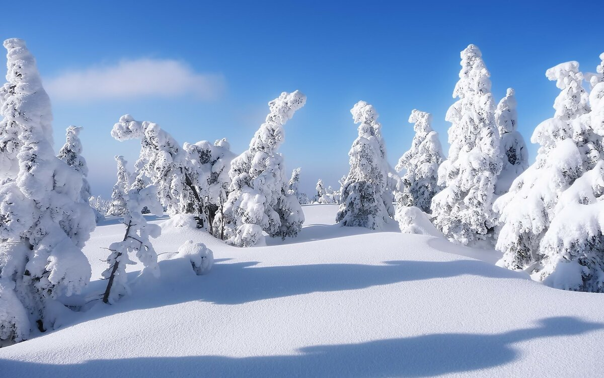 картинка зимней лесной поляны меню