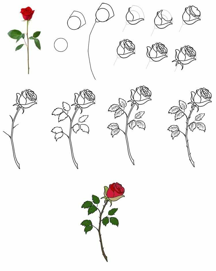 Гусеницы, картинки розы которые легко нарисовать