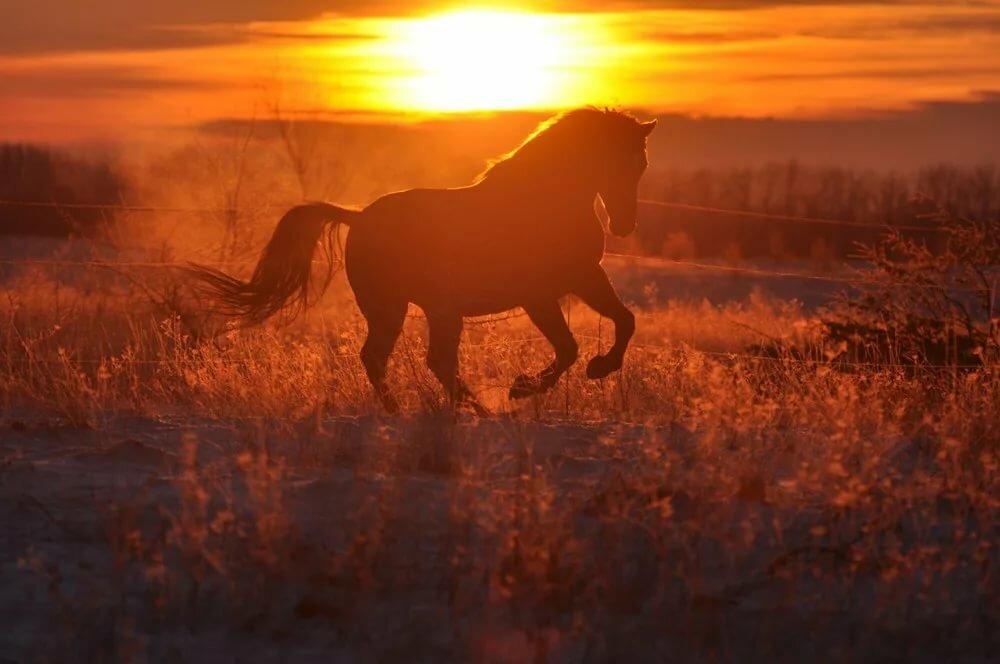 также является конь на закате картинки секции белых
