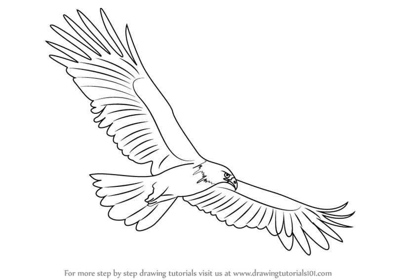 считаю, раскраска орел в полете обнародования