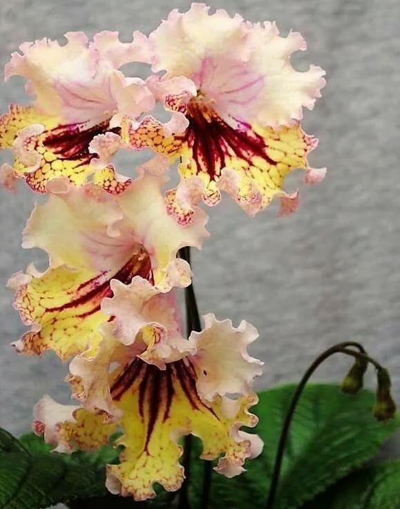 0144c4c3ab ... Pin szerzője: Ágnes Csabai, közzétéve itt: Virágok Pinterest Цветы,  Цветки орхидеи és