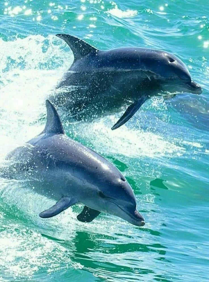 картинки картинки дельфинов нет, кто живет