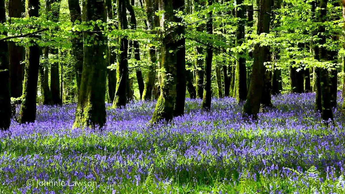 славится картинки релаксация лес поющих под дождем