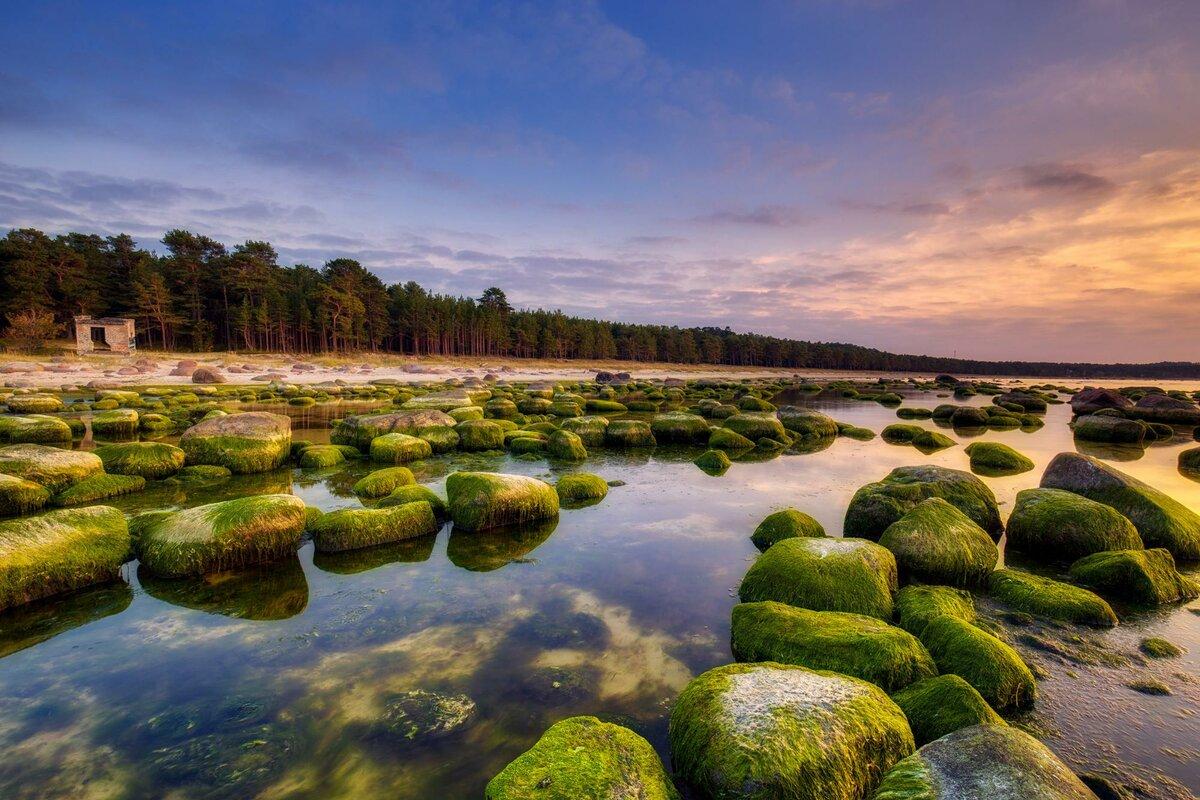 стал эстония природа пейзажи фото маленькая средняя