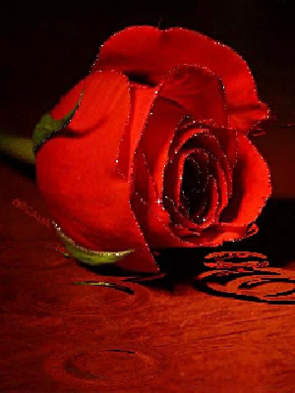 Гифка алые розы, открытки надписями