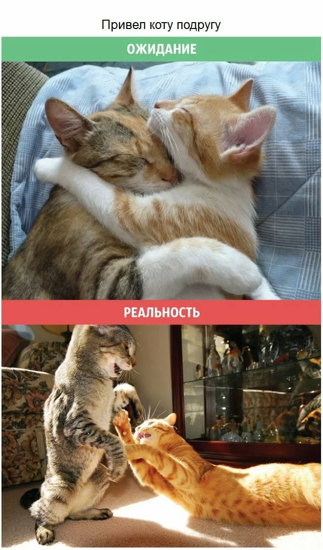 Кошки картинки и приколы