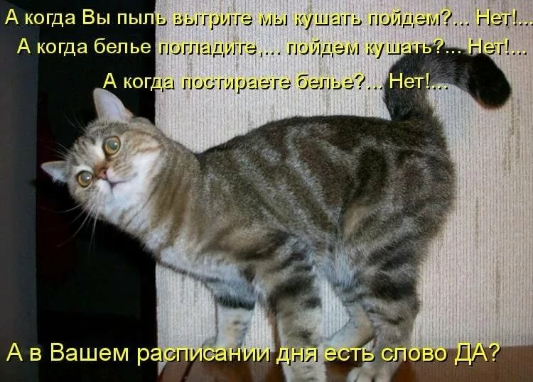 Приколы про кошек картинки новые, картинки про