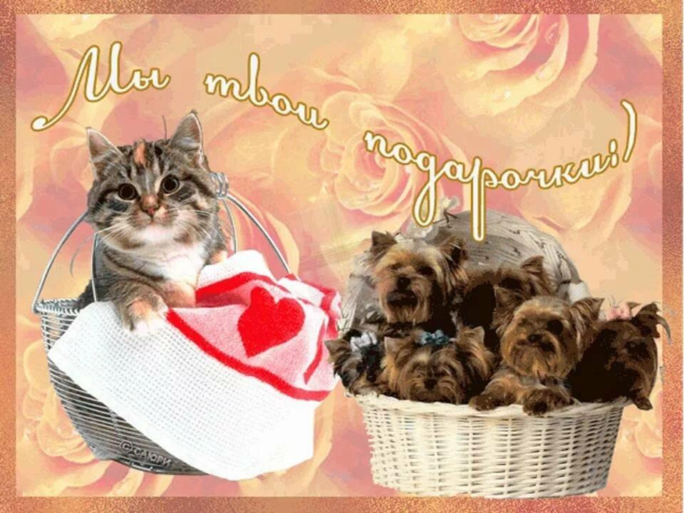 С днем рождения сына маме картинки гиф с котиками