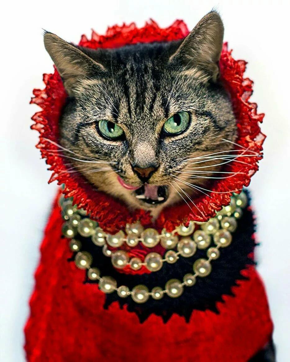 гламурная кошка картинки климова