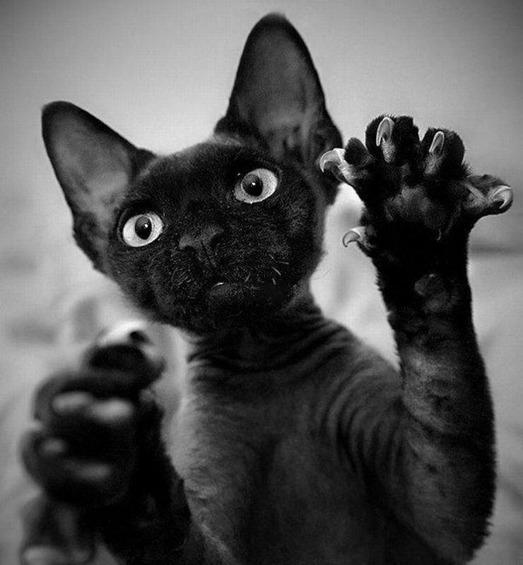 Открытки, черный кот картинки прикольные смешные