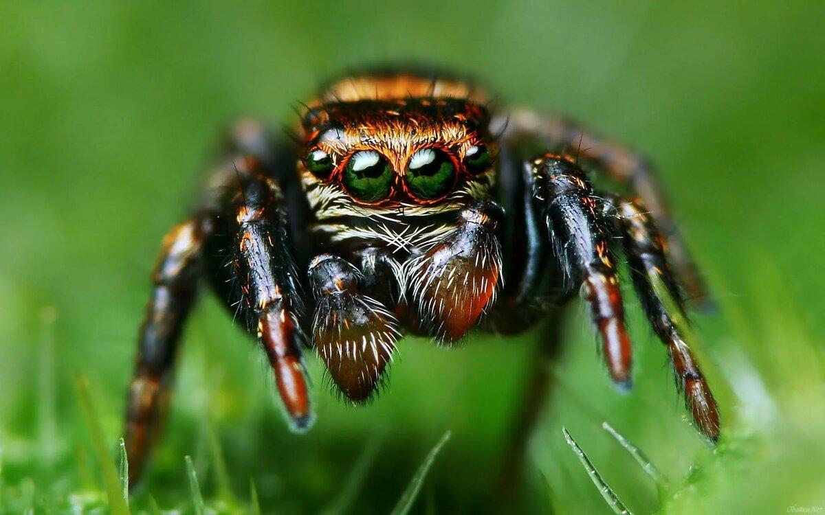 нежной картинки про пауков все работе над статьей
