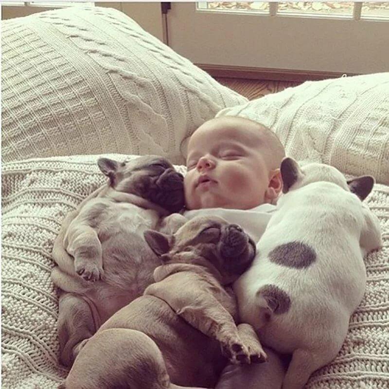Открытка, доброе утро картинки детям с животными