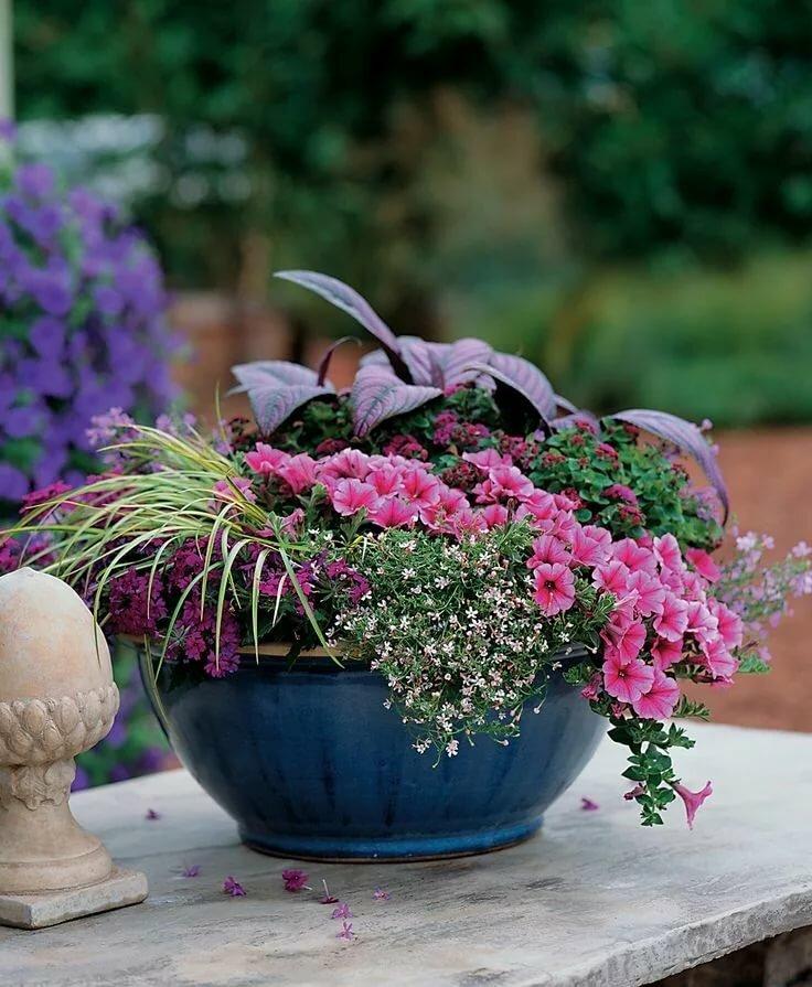 Цветы в садовых вазонах фото