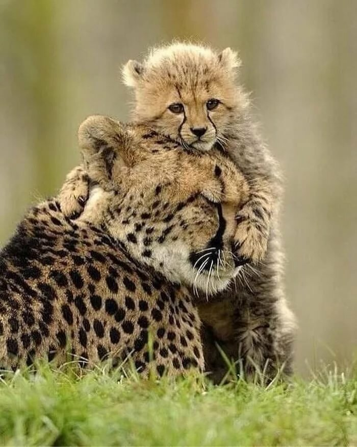 тем, картинки с мамами и детенышами животных оказалось