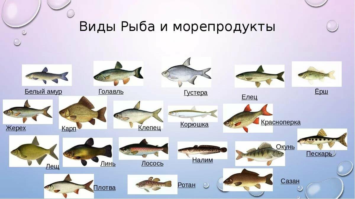 безветренные название картинки речной рыбы сегодня стиль