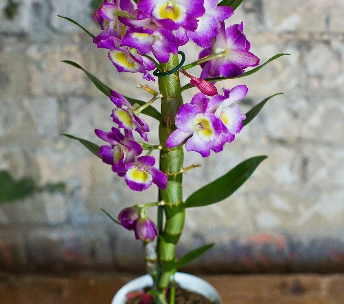 сегодняшний виды орхидей фото и названия данной статье