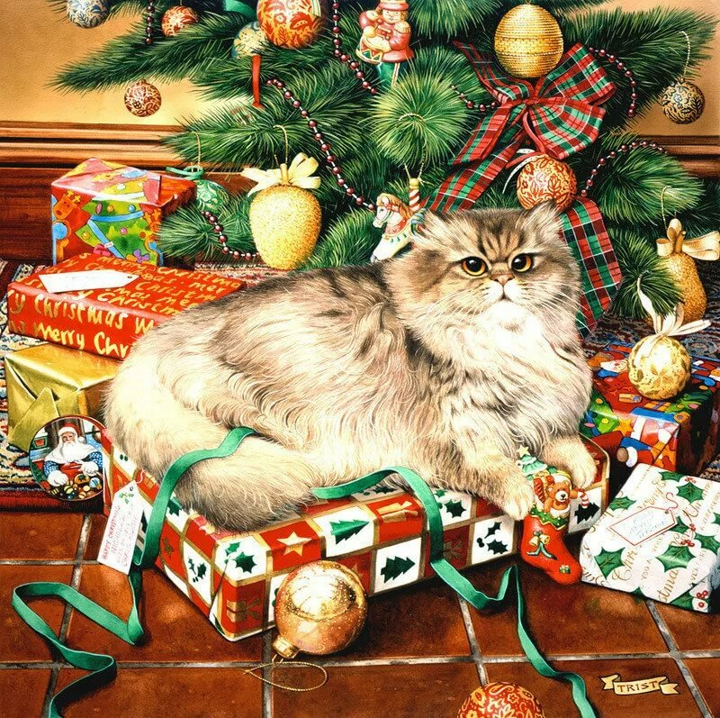 Смешные старушек, год кошки открытки
