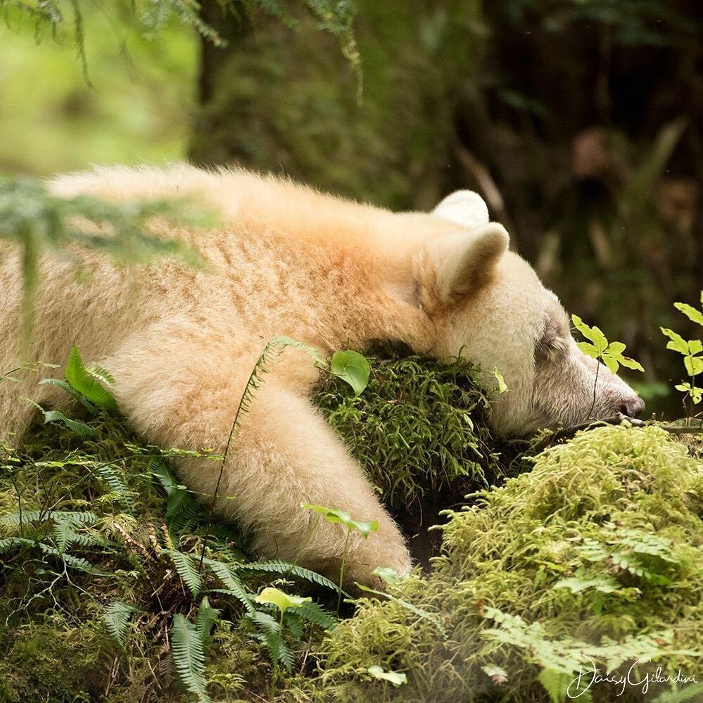 картинки отдыхающий медведь вот про другие