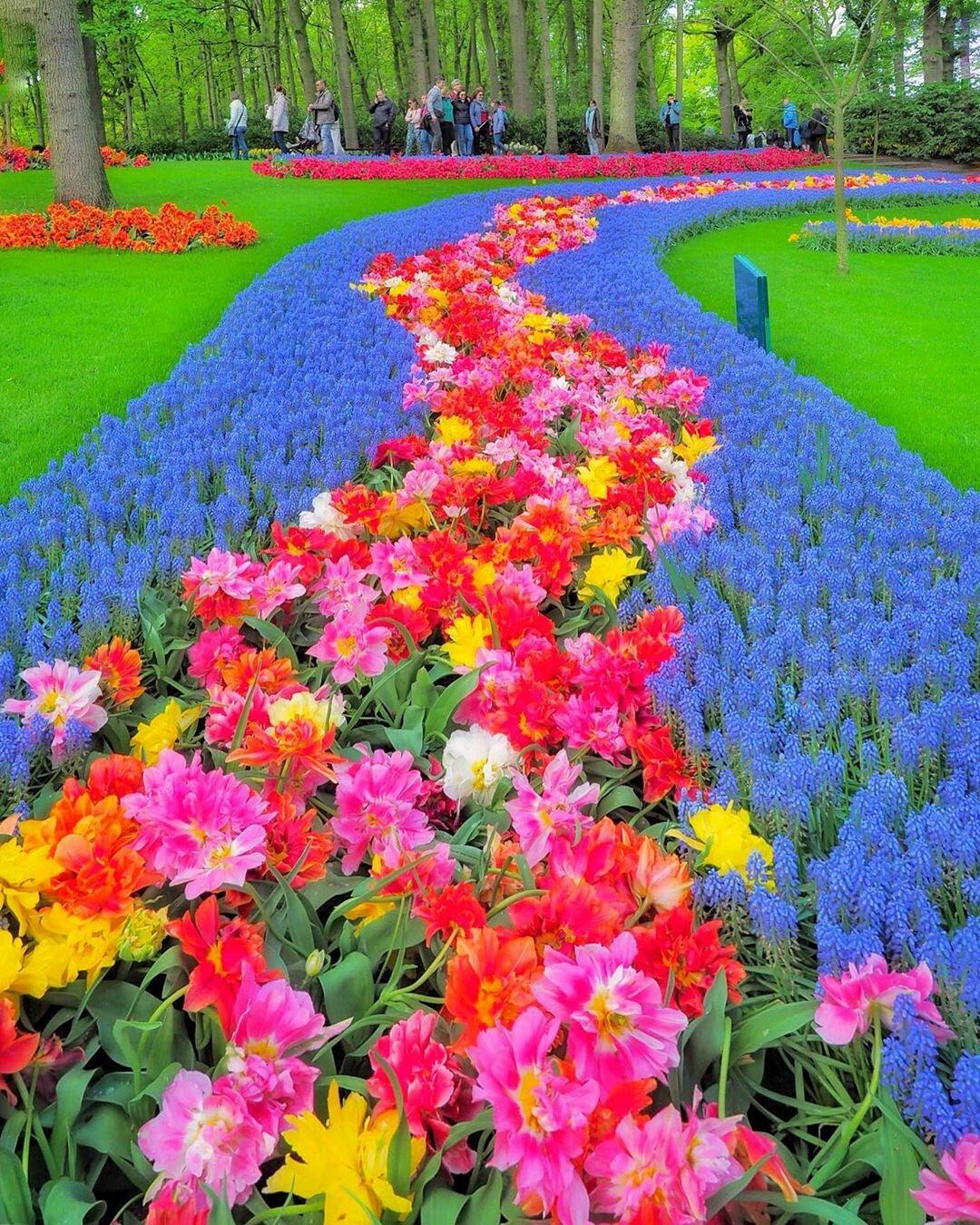 Клумба цветы картинки