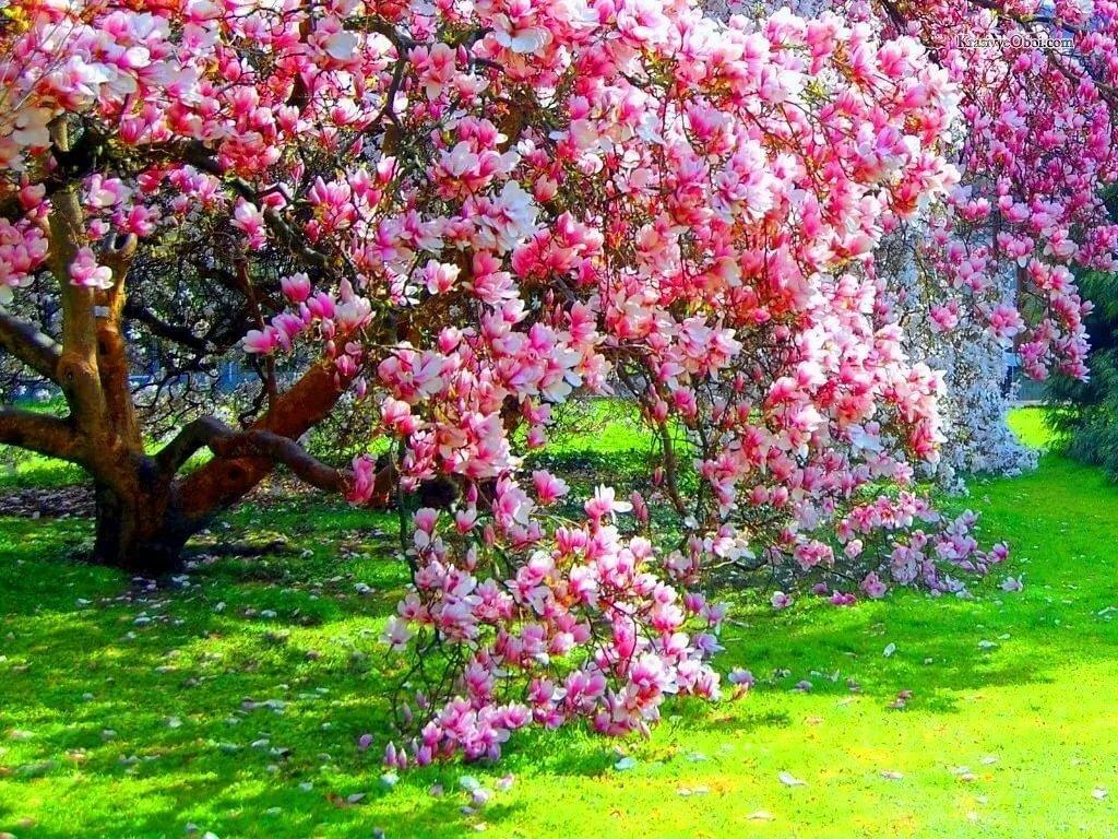 боб цветущий сад фото высокого разрешения был