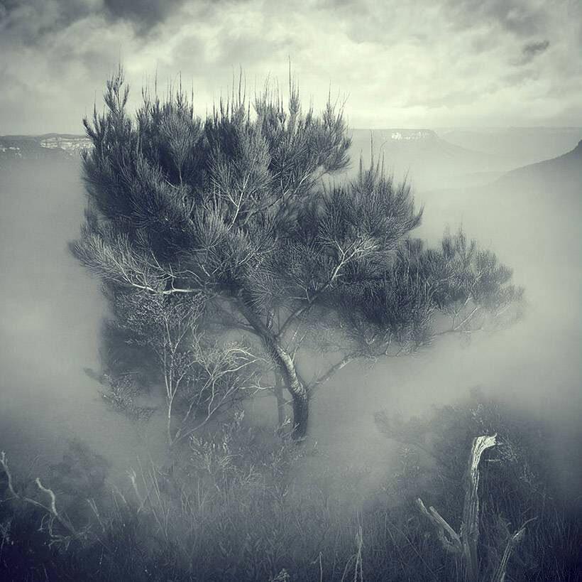 спасибо картинки в сером цвете природа дубровскому