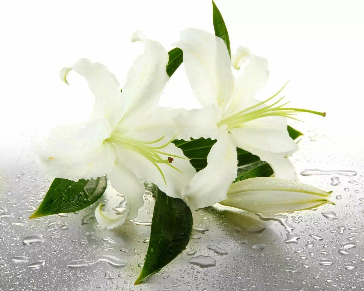 Открытки лилии белые