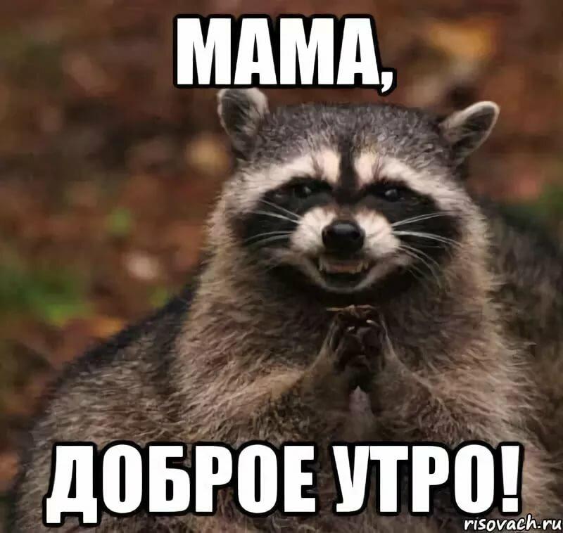 Смешные картинки мама доброе утро, ноября
