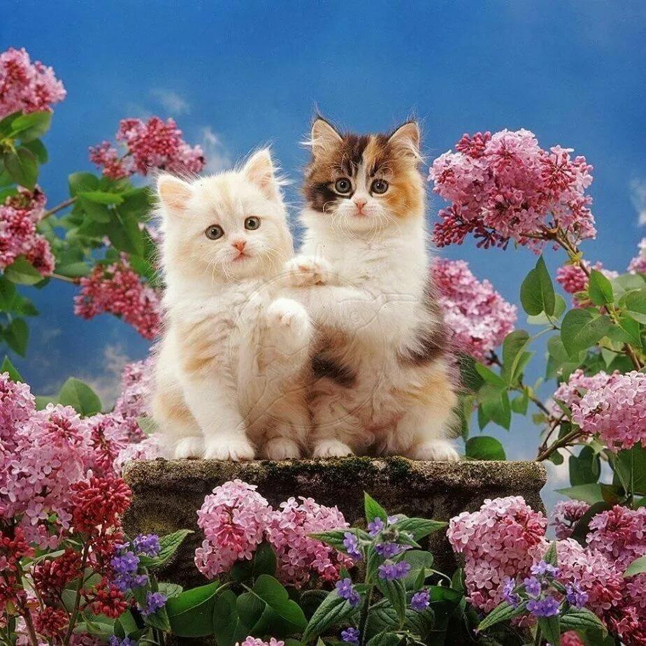 Самая красивая открытка с котенком