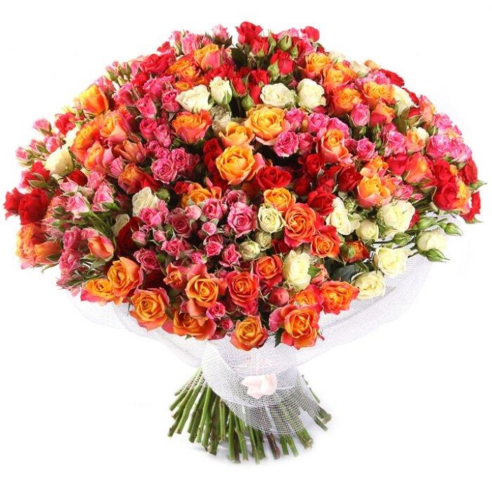 Кустовые розы картинки с днем рождения