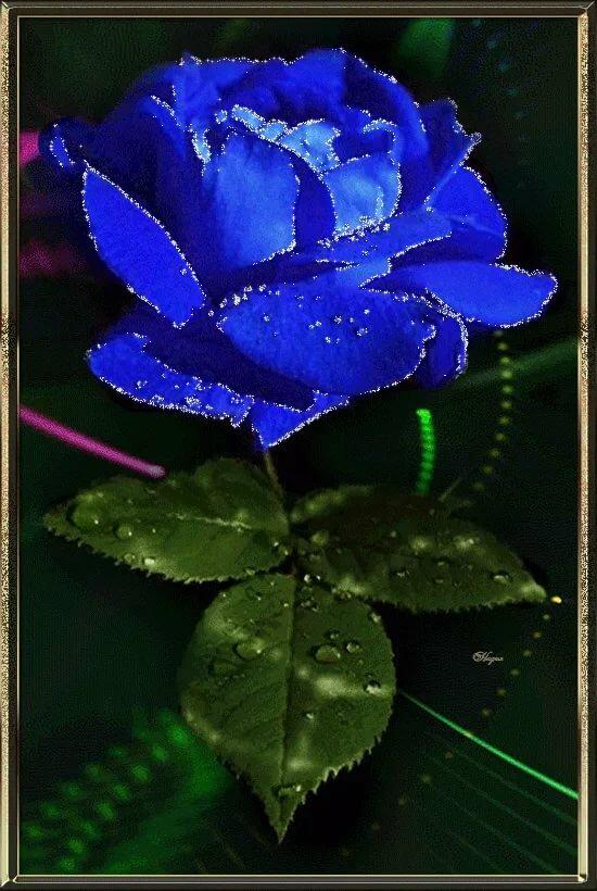 Анимированные картинки красивые цветы, приколы