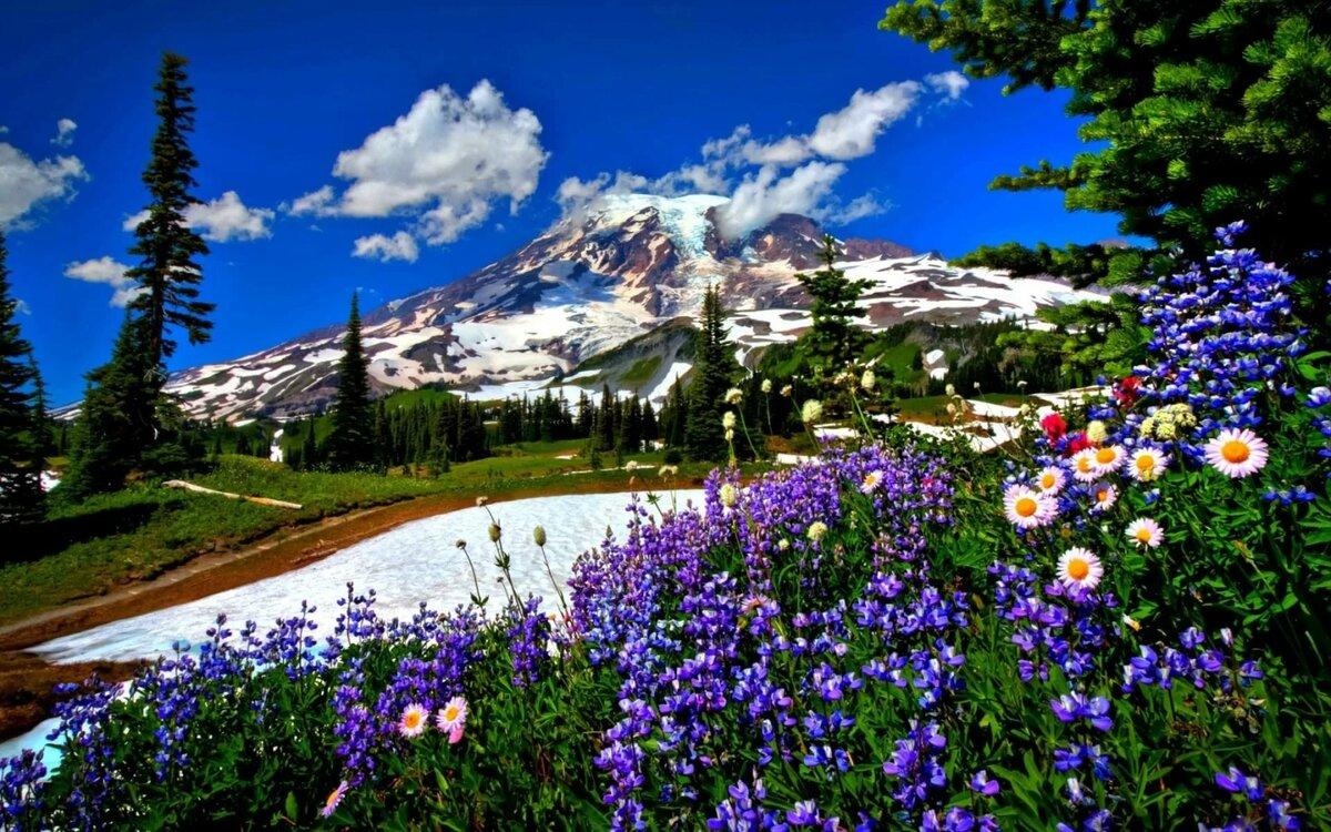 Красивые картинки природы и цветов на рабочий стол