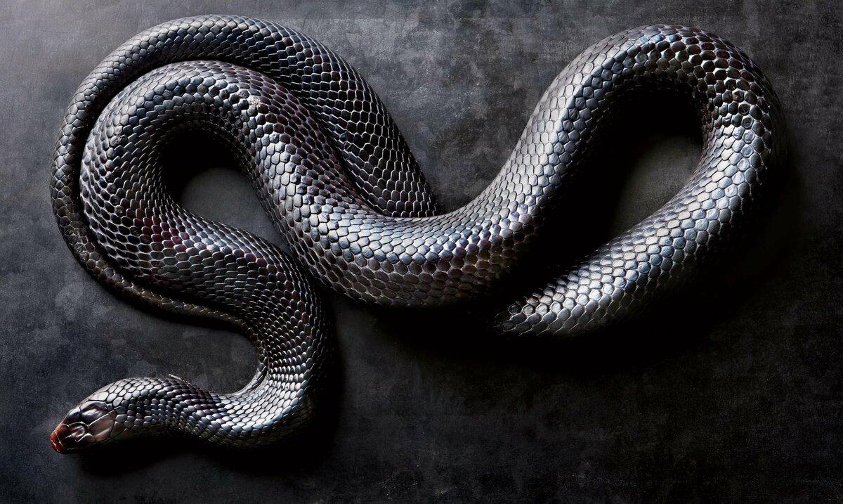 также имеет змеи в картинках для компа роллтон глубокую
