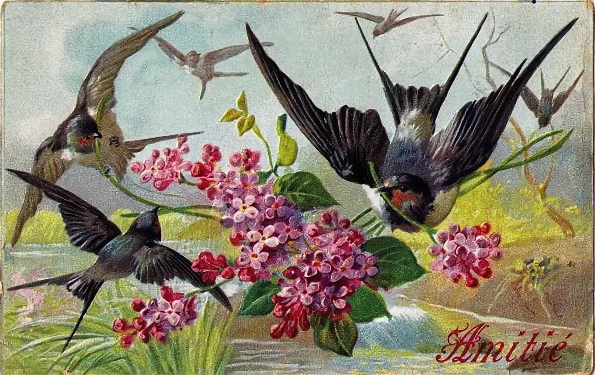 Картинка ласточки весною