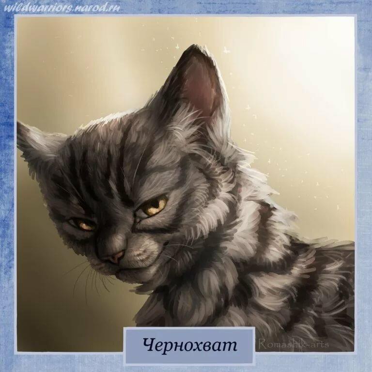 Картинки с надписями коты воители, смешные