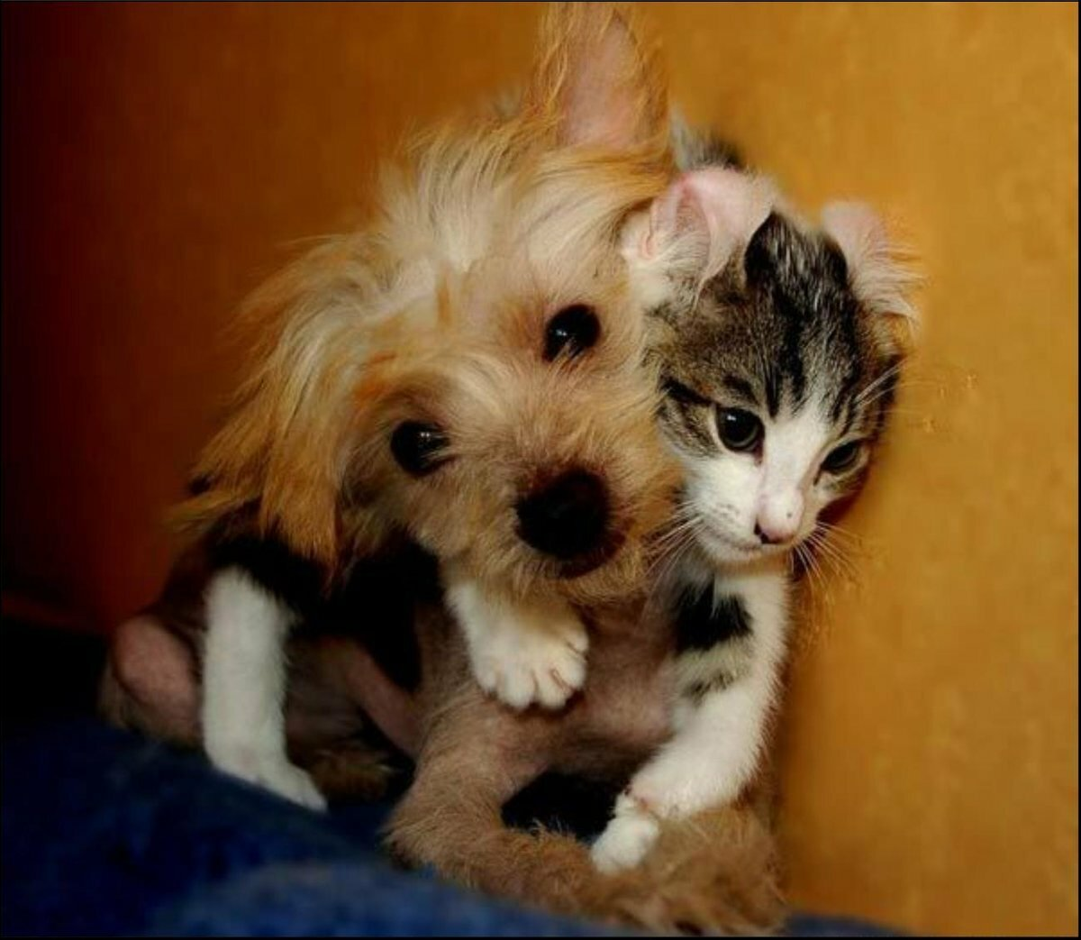 Картинки котят и щенят приколы, кратко