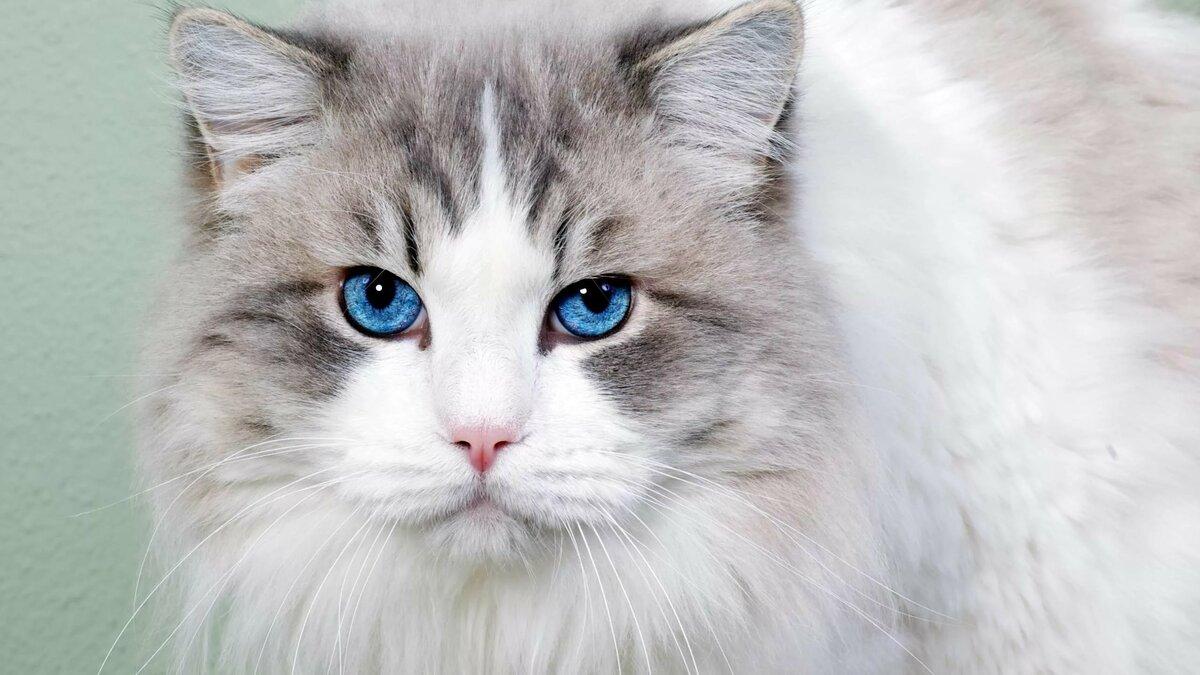 Коты фото красивые коты фото красивые, днем рождения