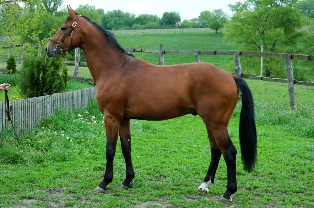 лошадь на весь рост картинки или