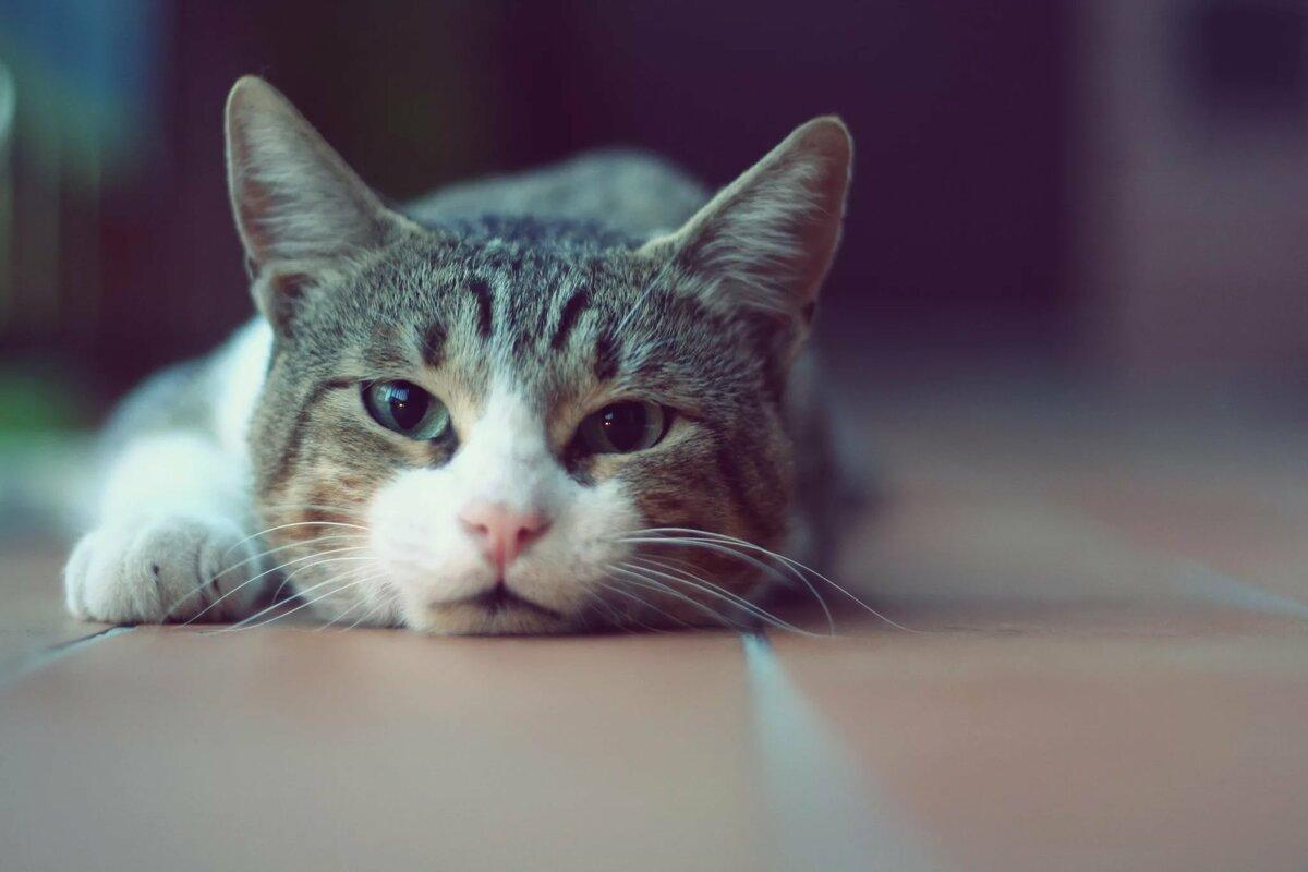 Прикольные картинки с кошкой на аву