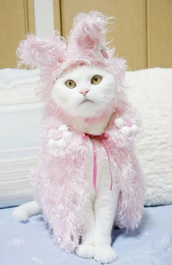 Картинки котята в платьях директора день