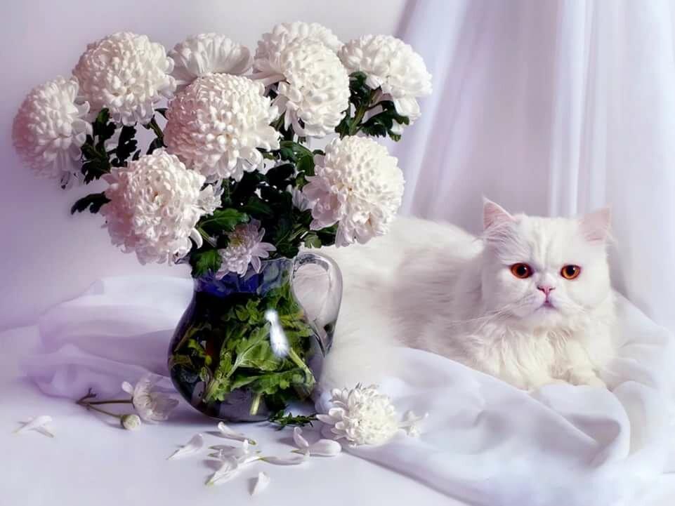 Картинки с днем рождения коты и цветы
