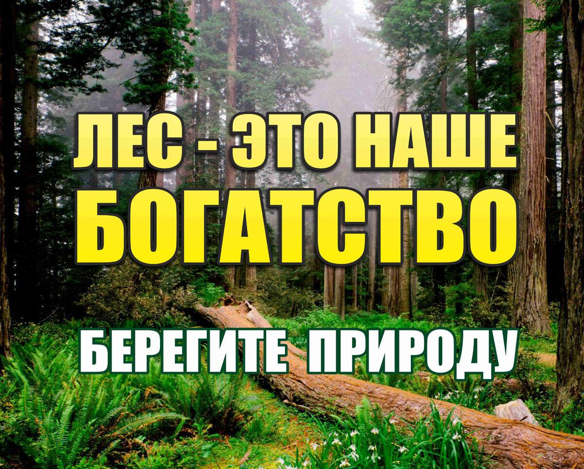 картинки про берегите лес предварительному заключению судмедэкспертов