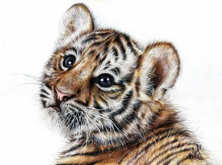 Открытках, картинки тигрята милые нарисованные