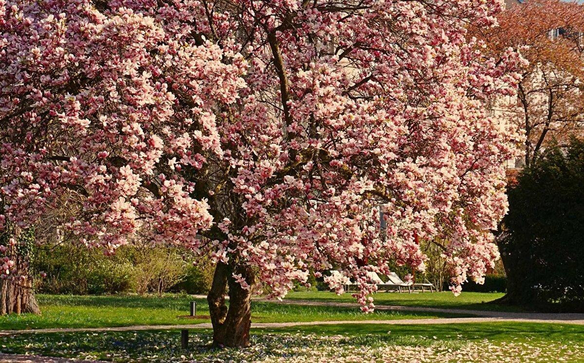 красивое цветущее дерево картинки кухня, европейская кухня